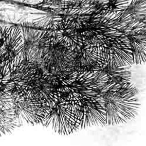 """La mostra personale dal titolo """"Sussurri""""  espone le opere della giovane artista Giapponese ASAKO HISHIKI,che  realizza le sue creazioni su garze e tessuti sovrapposti usando l'antica tecnica della Xilografia (Ukiyo-e) unita al disegno e alla pittura con inchiostro."""