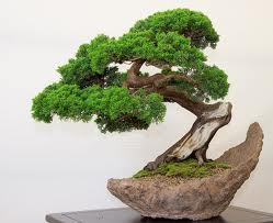 download bonsai