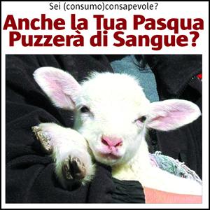 """Ogni anno a Pasqua vengono uccisi 900 mila tra agnelli, capre e pecore. Animali che arrivano quasi tutti dai paesi dell'est, con lunghi """"viaggi della morte"""", stipati in camion in condizioni insostenibili (molti arrivano al macello più morti che vivi) e mai sottoposti a controlli."""