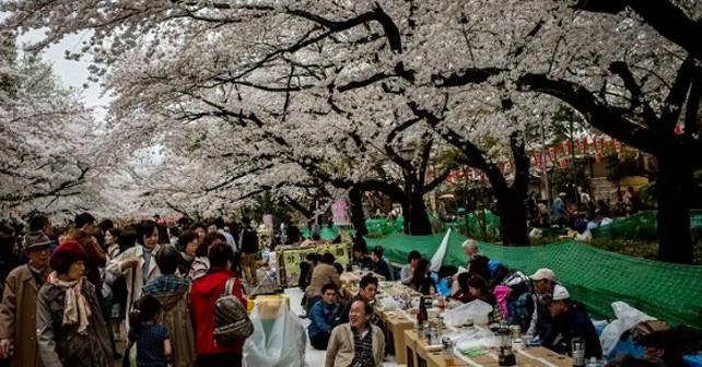 Apertura del giardino dell istituto giapponese di cultura u roma