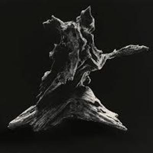 Dal 20 ottobre al 2 dicembre 2017, la Galleria Nobili – Paraventi Giapponesi ospita la mostra La Misura dell'Inespresso (沈黙の尺度), di Masao Yamamoto e Ettore Frani. La mostra è curata da Matteo Galbiati.
